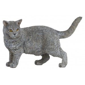 54040 Chat Chartreux