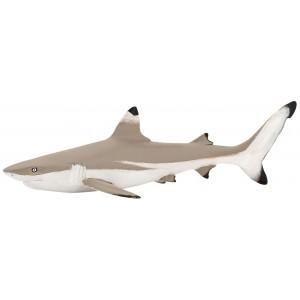 56034 Requin Pointe Noire
