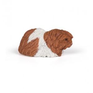 50276 Cochon d Inde