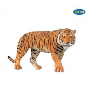 50004 Tigre