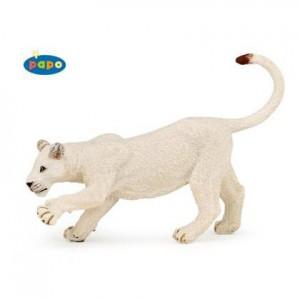 50136 jeune lionne blanche