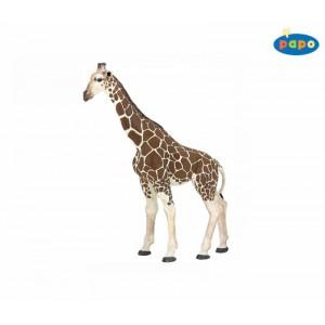 50096 Girafe
