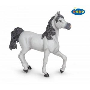 51537 Cheval Arabe Blanc