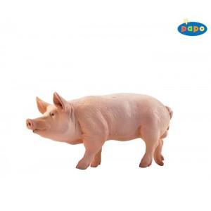51044 Verrat Porc