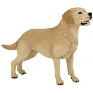 54029 Chien Labrador